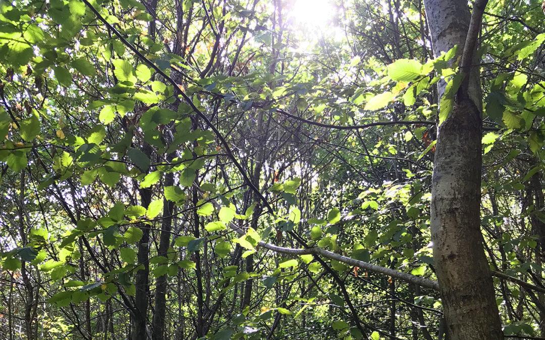 COMITE DES BALIVEAUX : Réunion du Samedi 9 février 2019 Forêt de Montlieu Chez Monsieur Christophe Allard