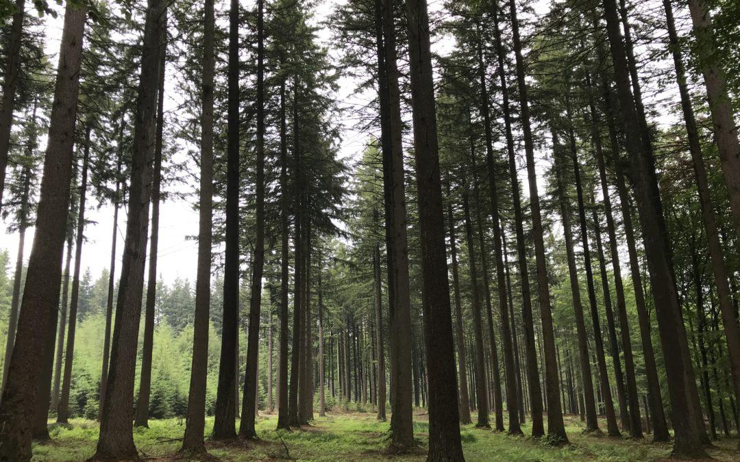 Fiscalité forestière : réunion le mercredi 15 mai 2019