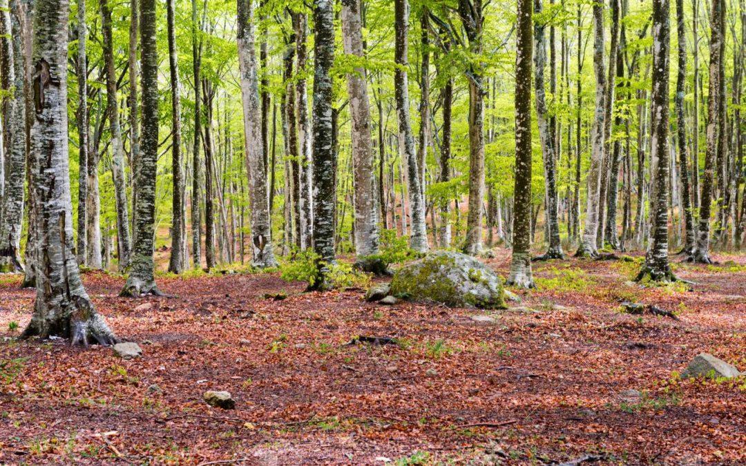 INSCRIPTIONS CLOSES ! VOYAGE 2020 : L'Ombrie et la Toscane – Le cœur vert de l'Italie