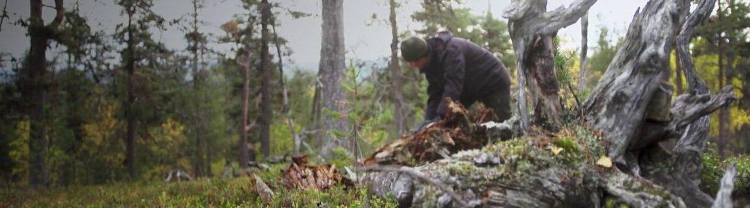 «Les héros de nos forêts» – Collection Arte