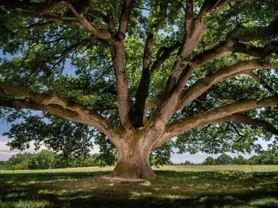 Élection de l'arbre de l'année