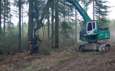 Récolter les gros bois sans abimer la régénération naturelle