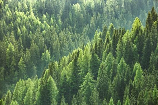 L'œil de Forêt Patrimoine, par Benoit Loiseau